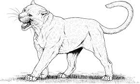 wild cat coloring pages coloring page for kids
