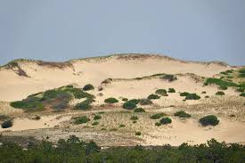 art class combines the natural beauty of provincetown u0027s dunes with