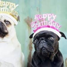 Meme Generator Dog - tag for happy birthday with dogs home happy birthday dog images