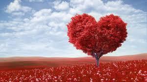 Love Flowers Valentine U0027s Day Love Heart Tree Red Field Flowers Hd Wallpaper