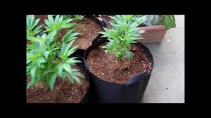 Miracle Grow Patio by Patio Grow Ep 1 Youtube