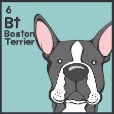 periodic table of dogs the boston terrier is one of 180 dogs illustrated on the dog table