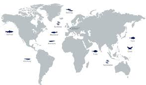 where does our fish originate deepblue