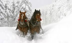 jackson wyoming sleigh rides alltrips