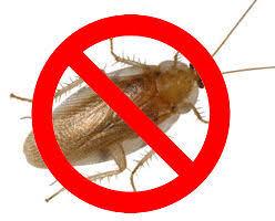 wilsonville or pest exterminators alpha ecological