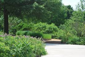 native plants landscaping why include native plants in your garden university of maryland