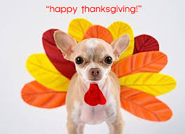 happy thanksgiving gobble gobble gobble chihuahua