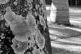 textures and macro shots u2013 page 2 u2013 greg dixon photography