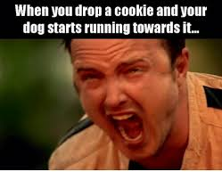 Drop It Meme - when you drop a cookie and your dog starts running towards it