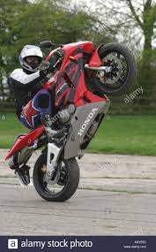 buy honda cbr600rr a stuntman pulls a wheelie on a honda cbr600rr motorcycle stock