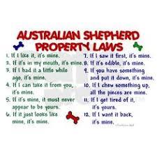 australian shepherd meme australian shepherd charm want stuff pinterest pandora