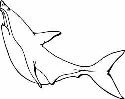 white sharks coloring pages kids coloring