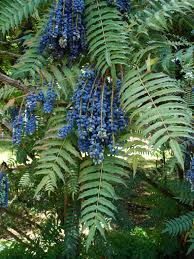 native plants of france unusual and exotic fruit and nut plant seeds from around the world