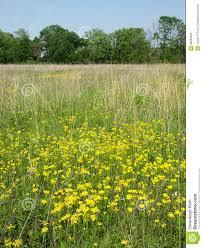 native prairie plants illinois wildflowers in a illinois prairie royalty free stock photo image