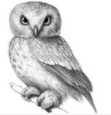 how to draw an owl drawings step by step tutorials how to