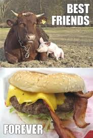 Funny Bacon Meme - animal capshunz bacon cheeseburger funny animal pictures with