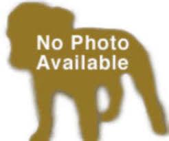 australian shepherd idaho dogs for adoption border collie in pocatello idaho petcurious