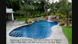 palm tree landscaping design houston texas pool landscape youtube