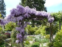 Design My Backyard Garden Design Garden Design With Wisteria Flowers Trees Uamp