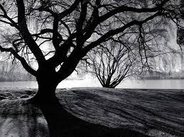 black trees by anthraxdeathrider on deviantart