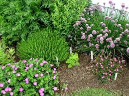 culinary herb garden designs idea landscaping gardening ideas