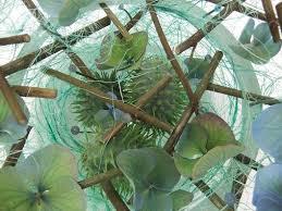 designs as cool as a ornamental cucumber