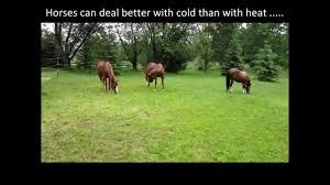 horses in pouring rain horses belong outside rain or shine