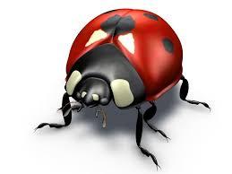 ladybug 3d model coccinella cgtrader