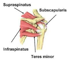 Rotator Cuff Injury From Bench Press Best 25 Acromion Pain Ideas On Pinterest Shoulder Impingement