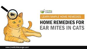 best home remedies for ear mites in cats youtube