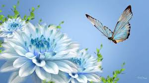 white and blue flowers fresh white blue flower cover photos nature flowers with