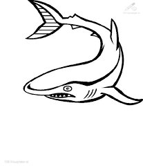 shark pictures color 1001 coloringpages animals u003e u003e shark