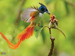 colorful bird live wallpapers of birds dowload