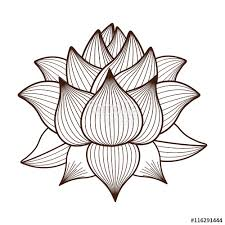 lotus flower drawing isolated icon design vector illustration