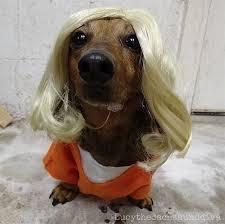 Doggie Costumes Halloween 13 Dog Costumes Halloween Dog U0027s