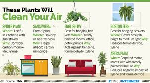best plants for air quality infographic 5 plants that works as air purifiers times of india