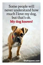 boxer dog origin 6117 best boxers rottweilers images on pinterest boxer love