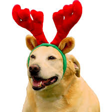 christmas reindeer christmas reindeer antlers for dogs by kyjen great for dogs