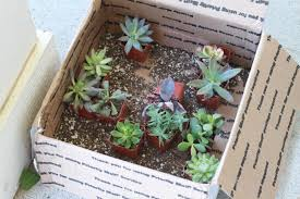 Amazon Succulents Pinterest Project Succulent Hostess Gifts Whatsarahfound