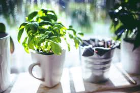 how to grow an indoor herb garden farm and dairy