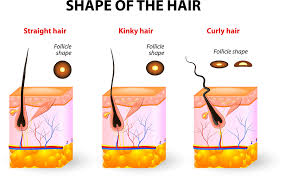 Hair Types by What Are The Hair Types Hairejuvenate