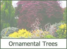 types of trees for landscaping most popular 2015