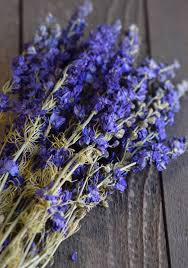 delphinium flower dried blue larkspur flowers for sale dried delphinium
