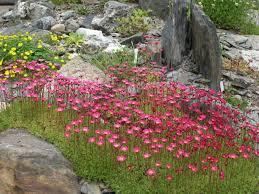 Rock Gardening Science Of The Season Set Sights Alpine High In Rock Gardening
