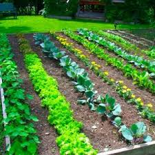 layout of small vegetable garden luxury vegetable garden layout