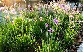 plant library society garlic