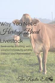 173 best brannon cattle company images on pinterest cattle