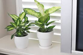 bringing in freshness with house plants honey we u0027re home