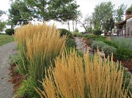 how to plant a sustainable garden in boulder colorado using