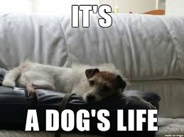 Russell Meme - our jack russell terrier meme on imgur
